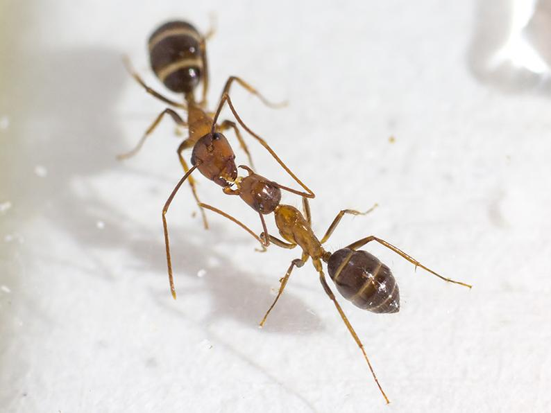 Ants aren't the only critters to exchange fluids through this process, known as trophallaxis