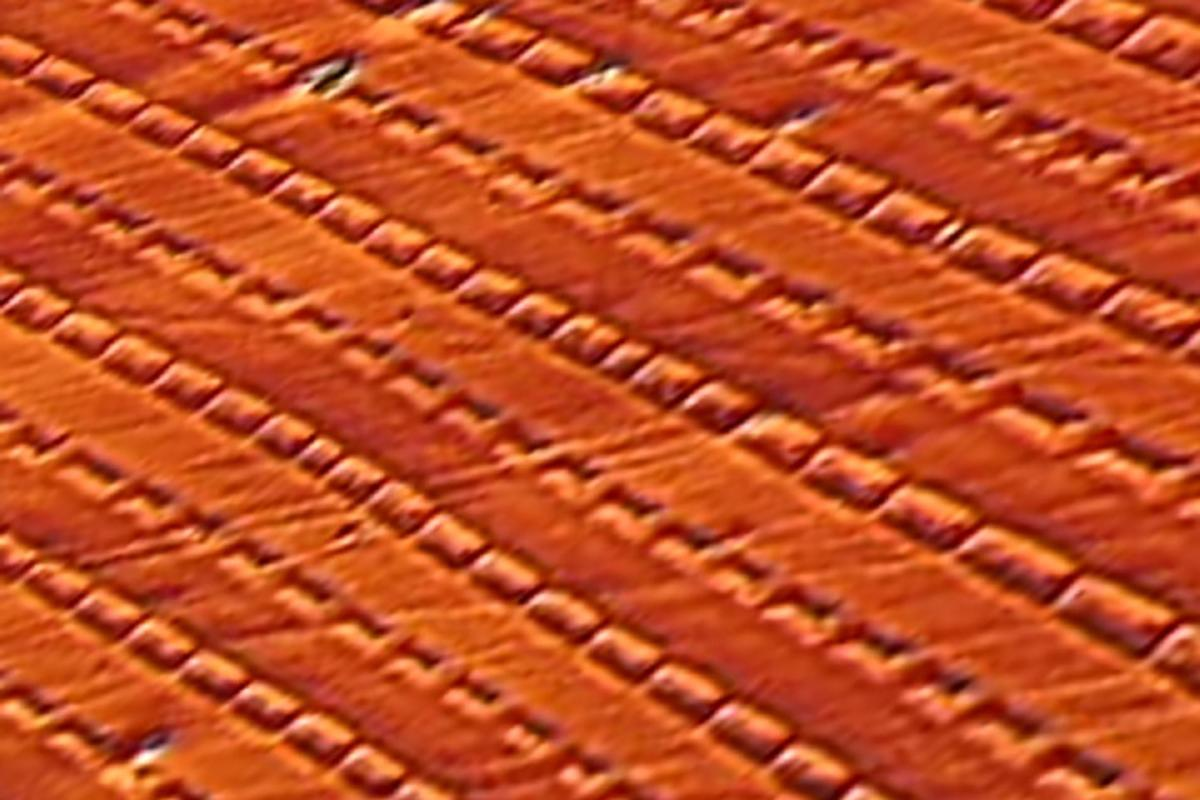 A microscopic view of periodic magnetic cells created in iron-gallium alloy that appear to be responsible for the strange non-Joulian magnetostriction