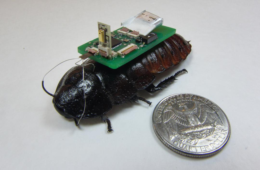 Researchers at NCSU have developed a way to use remote-controlled cockroaches working in conjunction with drones to help map environments like collapsed buildings