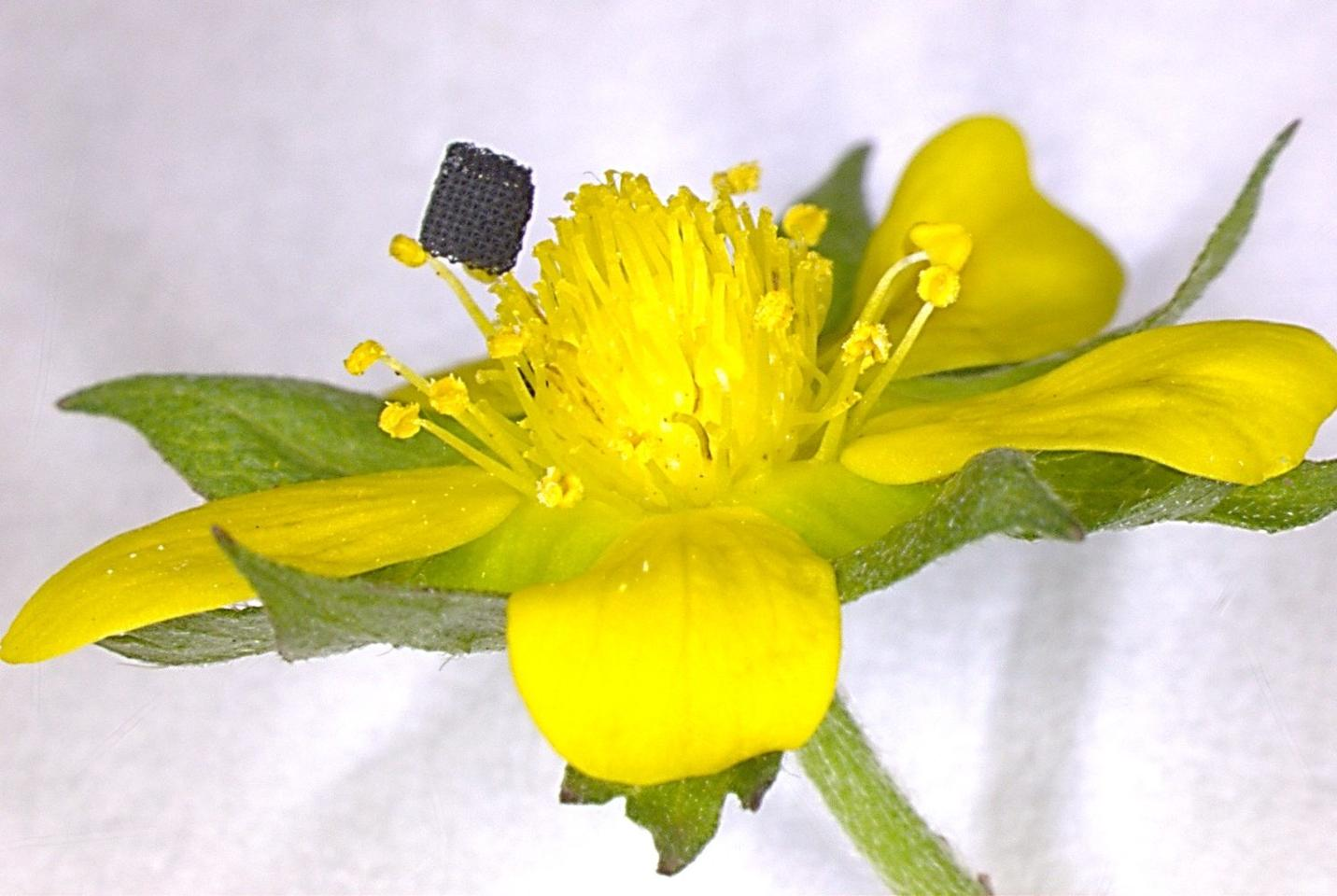 New 3D printing process paints graphene aerogel in far finer