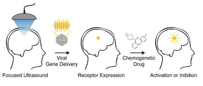 A diagram illustrating the acoustically targeted chemogenetics (ATAC) method