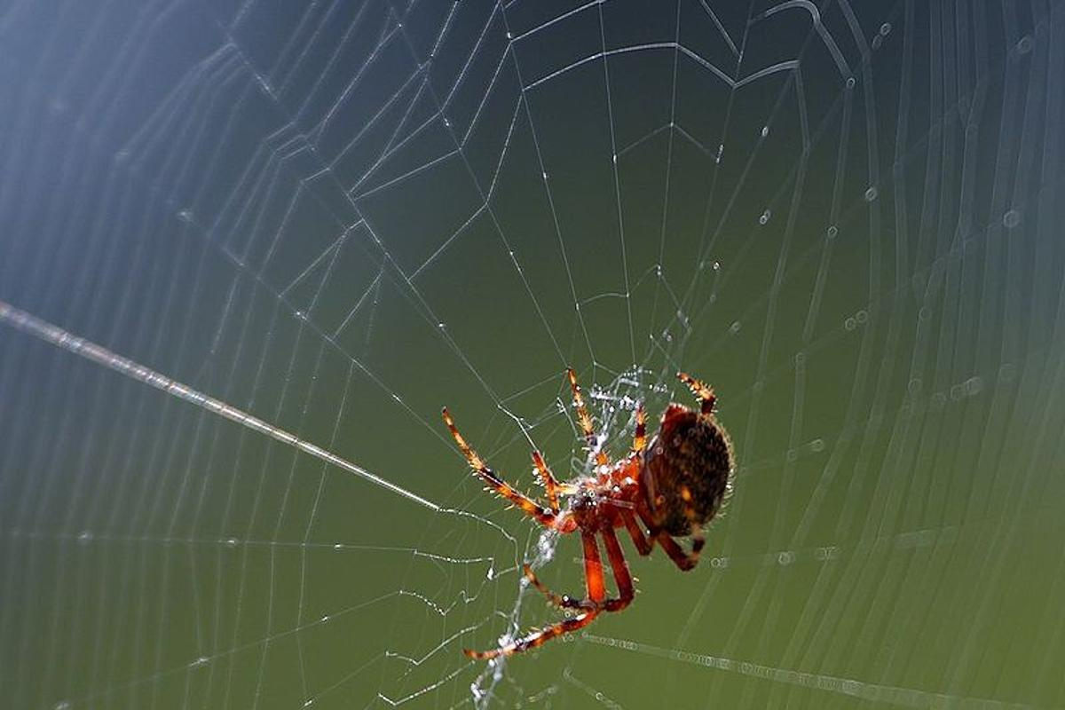 Scientists claim to have recently made progress towards understanding what's behind the incredible strength of spider silk fibers