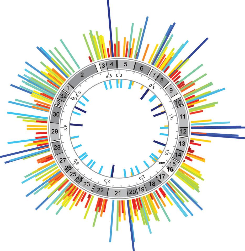 Frequency map of MAGE-generated TAG::TAA codon replacements across the E. coli genome at each TAG codon replacement position. Frequency of TAG::TAA replacements by MAGE across all TAG codons denoted by height- and color-coded bars (Image: F.J. Isaacs et. al.)