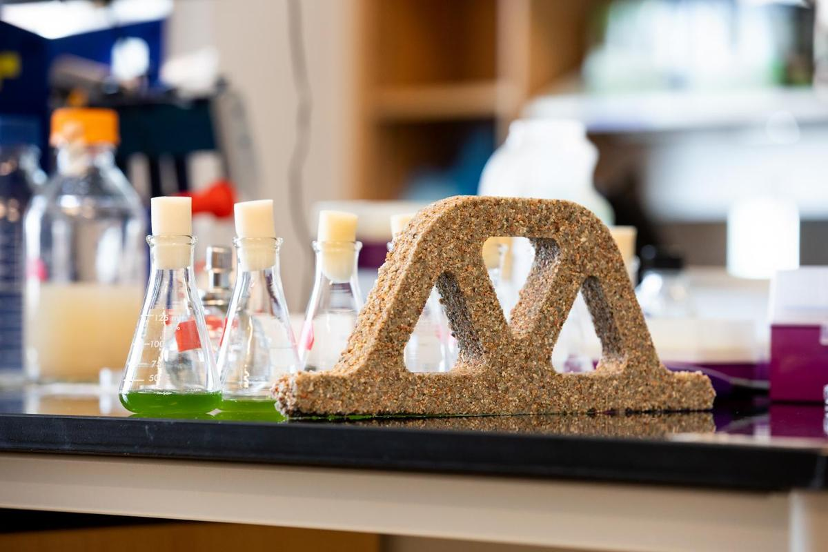 The bricks are made from sand, hydrogel ... and Synechococcus cyanobacteria
