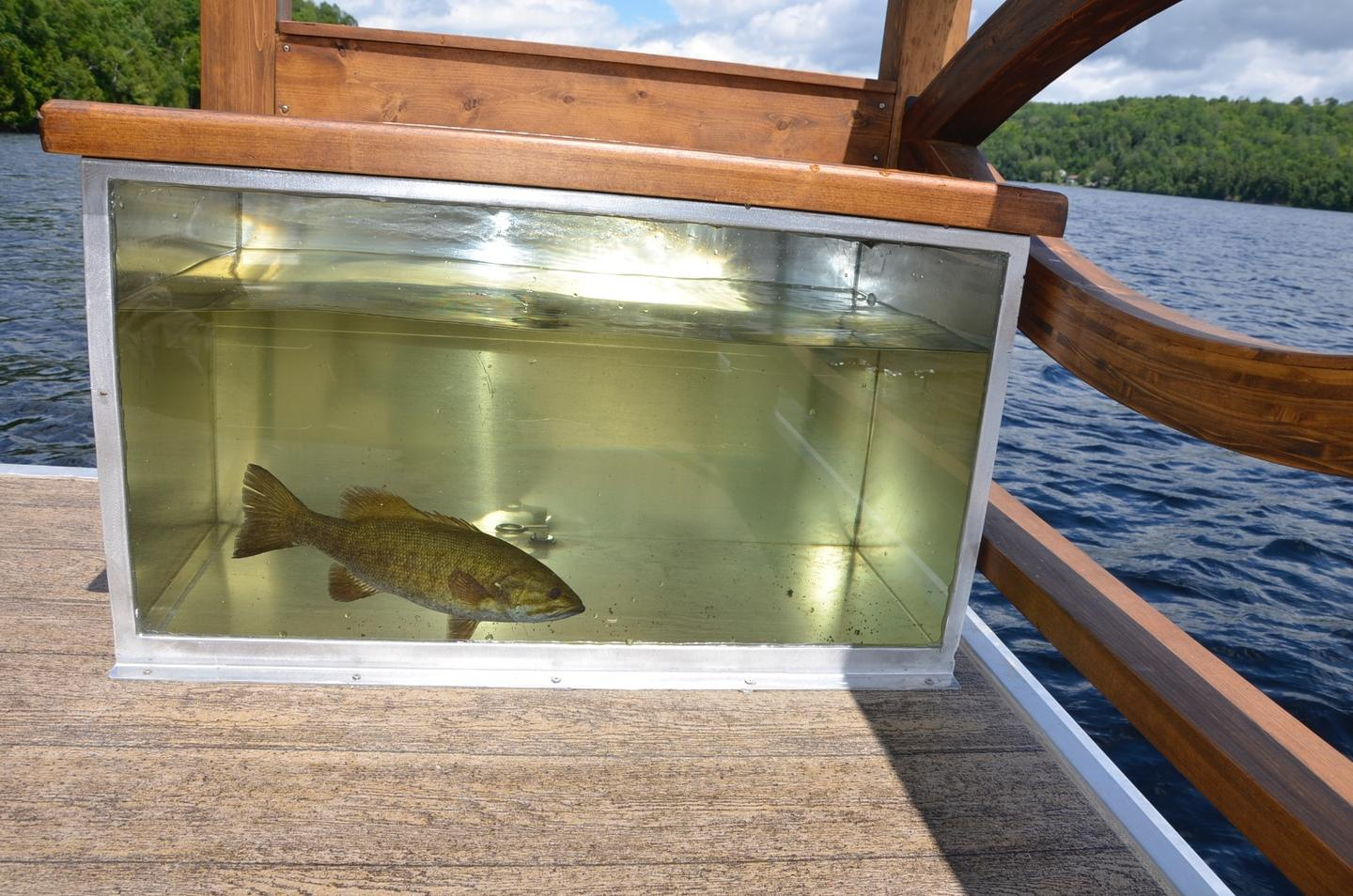 The Le Koroc model pictured is the fishing version and its deck area is equipped with a fish tank to store the day's catch